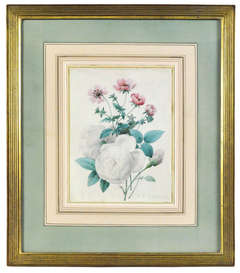 White rose with other flowers. Floral watercolour on vellum.