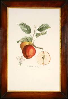 Traité des arbres fruitiers: A Set of Four Apples