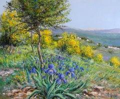 Mimosas dans le Tanneron (Provence)