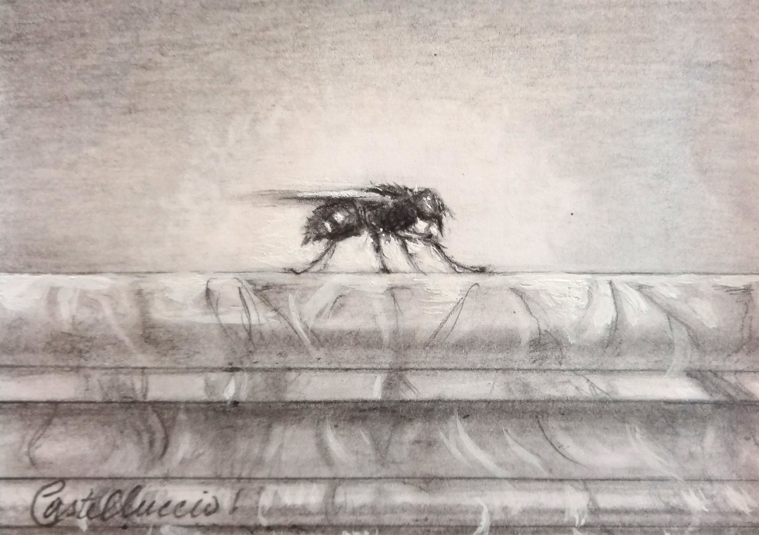 Study For Musca Domestica MMXII