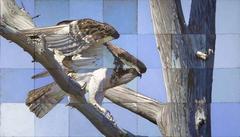 Cape Fear Osprey
