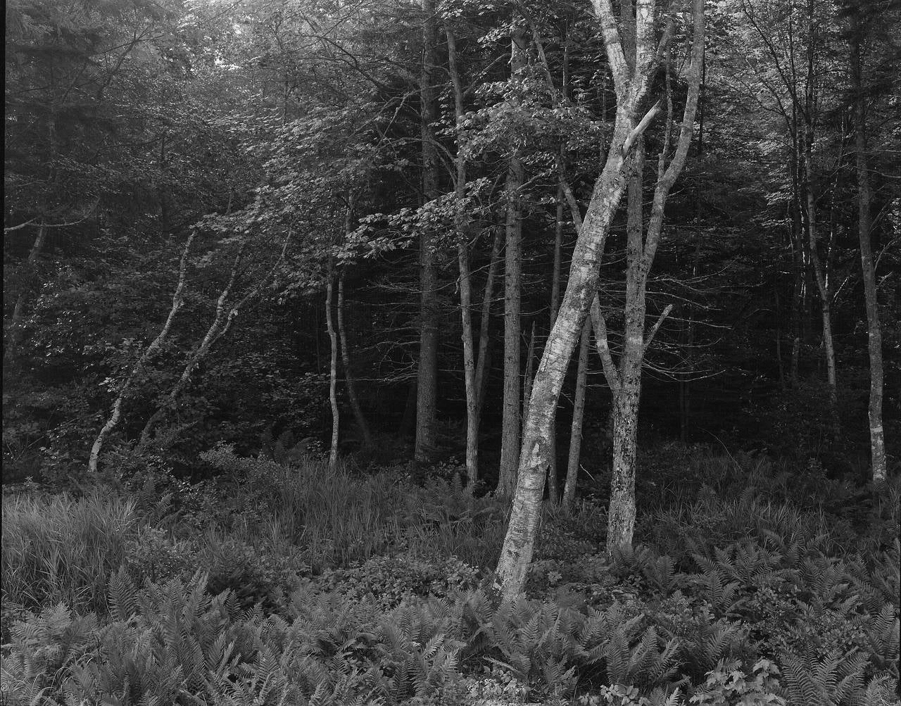 Woods, Port Clyde, Maine