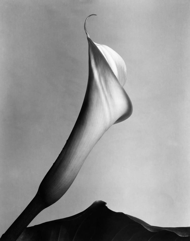 Calla Lilly with Leaf