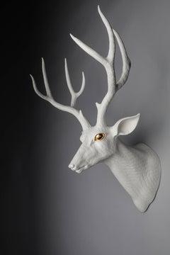 Mule Deer - Center
