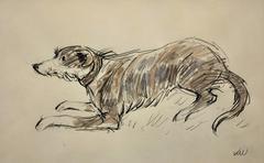 Welsh Sheepdog ( Welsh Collie )