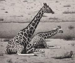 Giraffes – Cow and Calf
