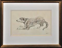 Sheepdog (Collie)
