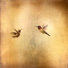 Hummingbirds in Golden Sky