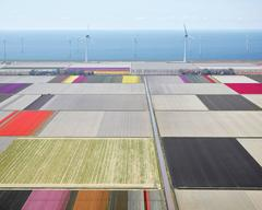 David Burdeny - Tulips and Turbines 2