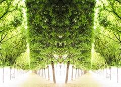 Trees IV, Palais Royale