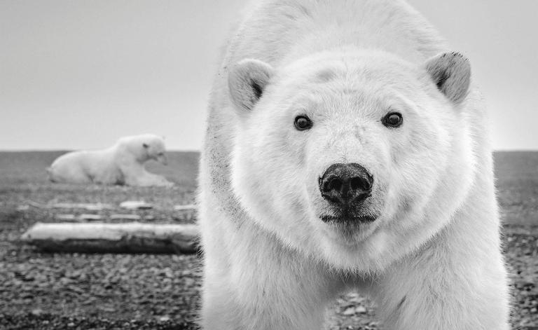 David Yarrow Black and White Photograph - Hello