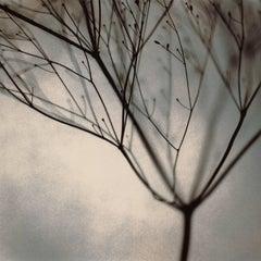 Ruth's Tree
