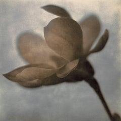 Magnolia Profile Ed. 16/50