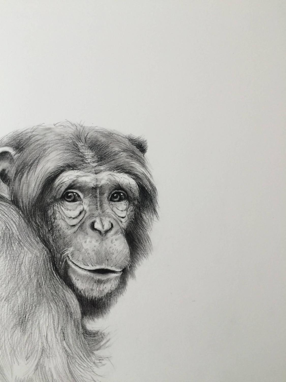 adonna khare smiling chimp for sale at 1stdibs