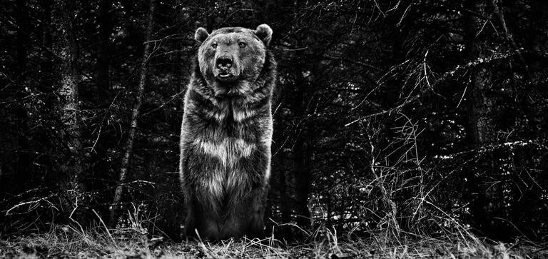 David Yarrow Black and White Photograph - The Boss
