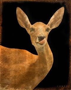 Deer Lick #5/6