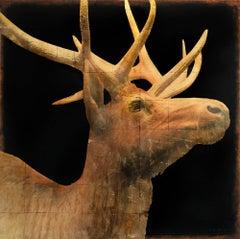 Elk #3/6
