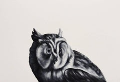 Owl (After Duranti)
