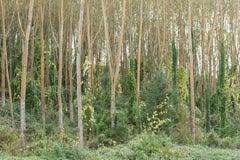 """Tuscany Autumn"", color photograph, trees, green, Italian, woodland, yellow"