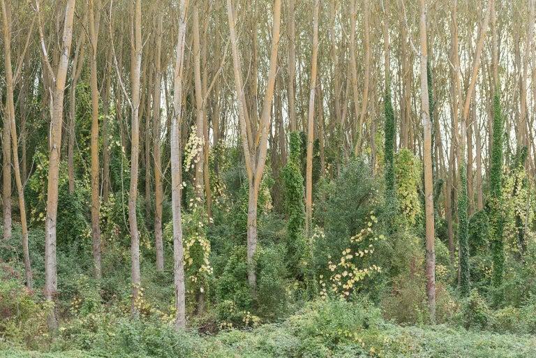 """Tuscany Autumn"", Vicki McKenna, color photograph, trees, green, woodland - Photograph by Vicki McKenna"