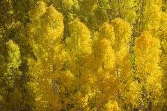 """Aspen Cloud, Lee Vining Canyon"", Vicki McKenna, color photograph, autumn"