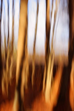 """Trees"", Rebecca Skinner, color photo, abstract, metal print, brown, earth tones"