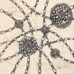 Cells Alive 6
