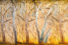 """""""Shimmering Light"""", trees, contemporary, color photograph"""