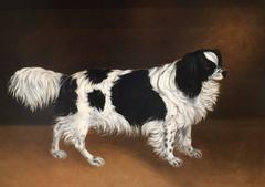 English folk art Spaniel