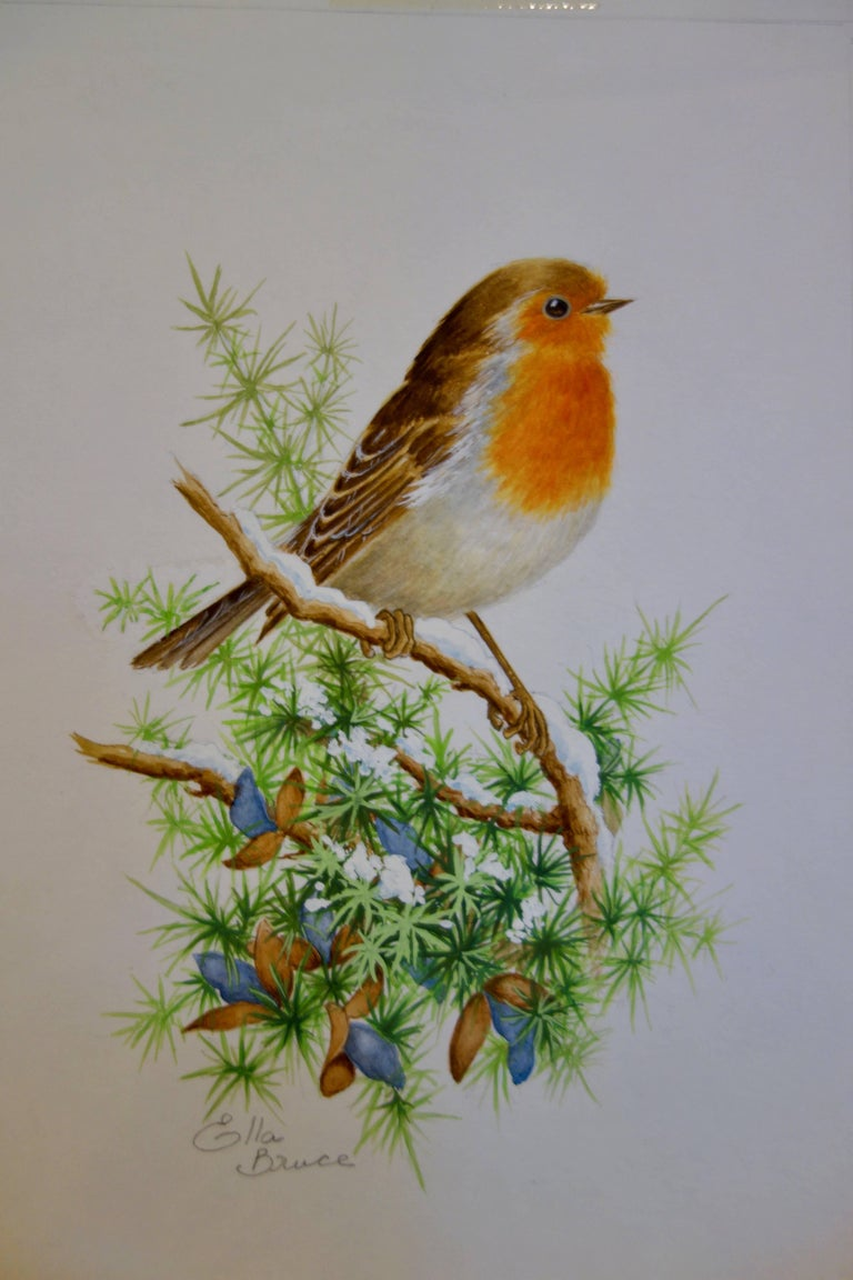 Ella Bruce Animal Art - A Christmas Robin standing on a snow covered branch of a tree, English