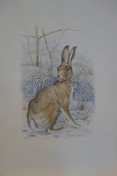 Study of An English/British Hare in a landscape