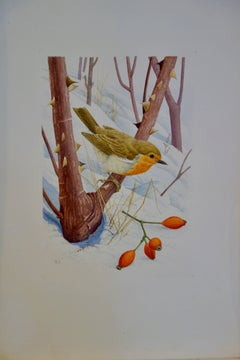 Study of a Robin in a Winter setting, with snow and a sprig of Holly berries