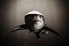 Sharks, Standoff, Black & White Photography, Fine Art Print