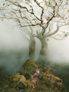 Tree, Fairy Glen, Isle of Skye, Scotland, 2013