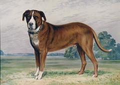 Hunting Dog, St. Bernard
