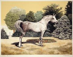 Portrait of an Arabian Horse