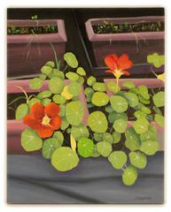 Last Nasturtiums of Summer