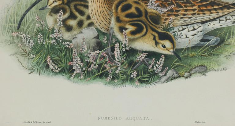 Original hand-colored lithograph from