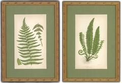 Mountain and Holly Fern