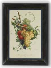 Chasfelas, Muscat et Peches No 12 (Grapes and Peaches)