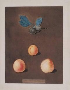 (Apricot) Black Apricot, Breda Apricot, Brussels Moore Park Apricot