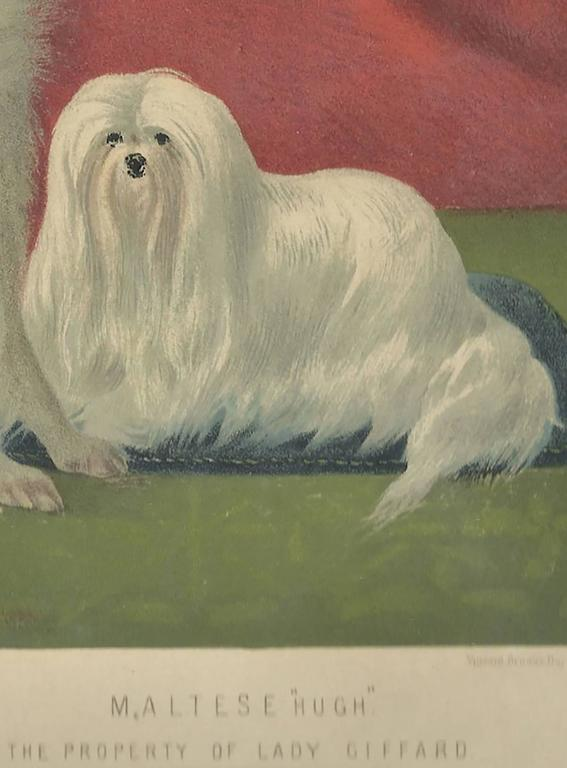 Portrait of Charley the Pomeranian and Hugh the Maltese - Beige Animal Print by Vero Shaw