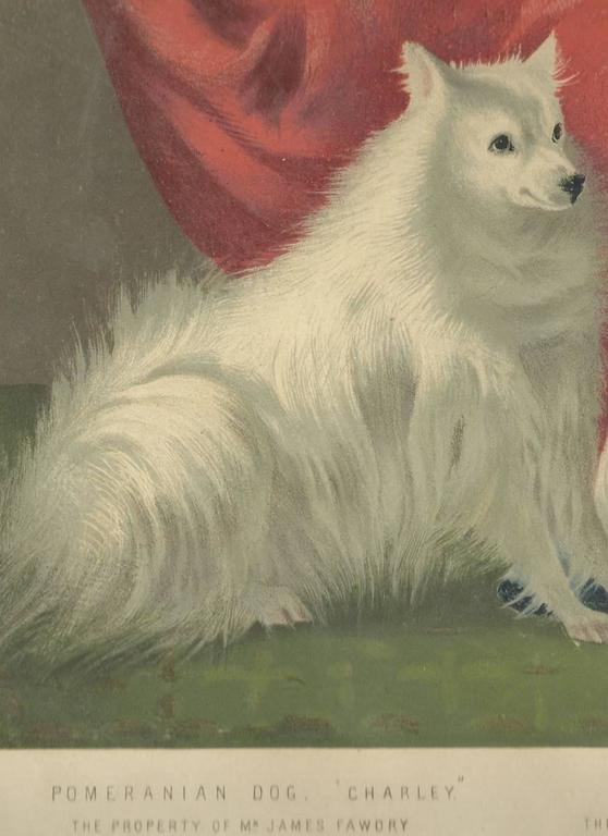 Portrait of Charley the Pomeranian and Hugh the Maltese - Realist Print by Vero Shaw