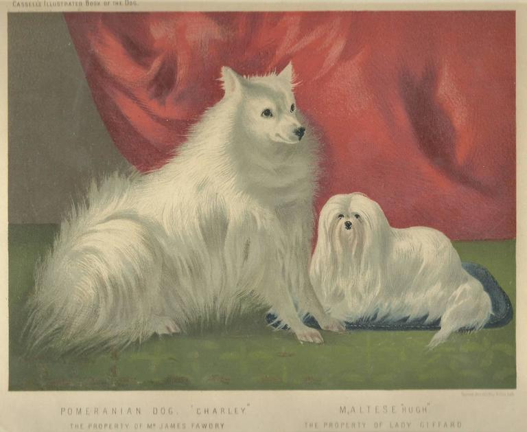 Portrait of Charley the Pomeranian and Hugh the Maltese - Print by Vero Shaw