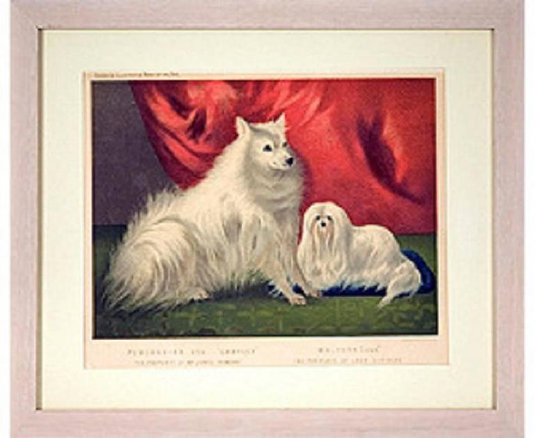Vero Shaw Animal Print - Portrait of Charley the Pomeranian and Hugh the Maltese