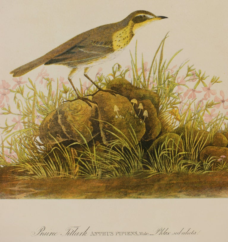 Prairie Titlark, Plate 150, chromolithograph, published 1860 in Julius Bien's edition of