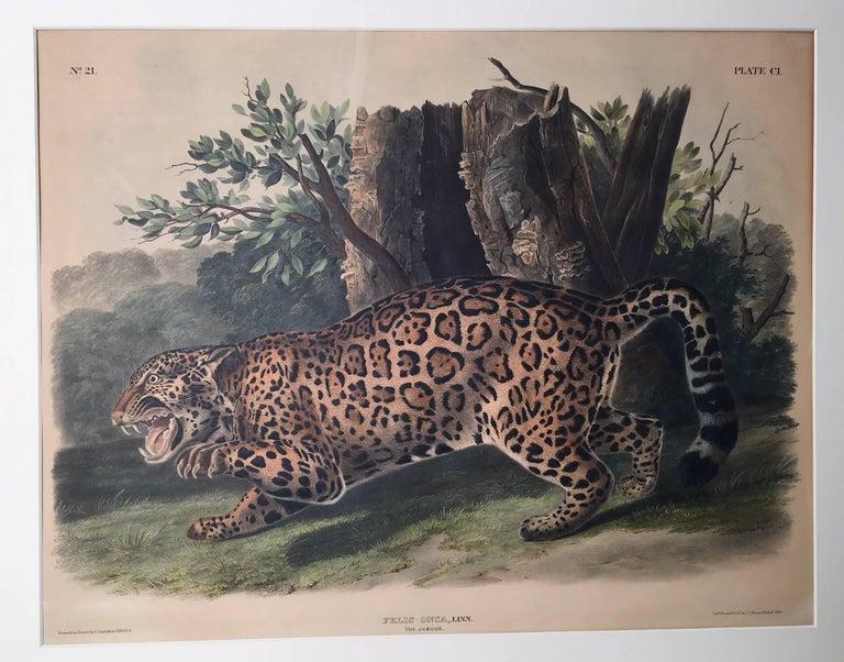 John James Audubon Print - Felis Onca, Linn. The Jaguar.