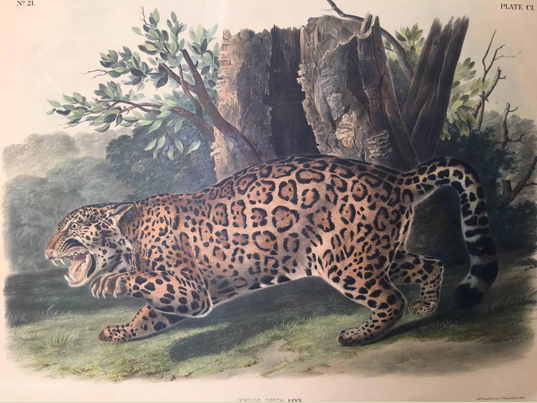 Felis Onca, Linn. The Jaguar. - Print by John James Audubon