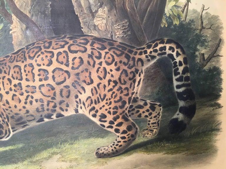 Felis Onca, Linn. The Jaguar. - Gray Print by John James Audubon