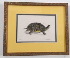 A Pair of framed Turtles